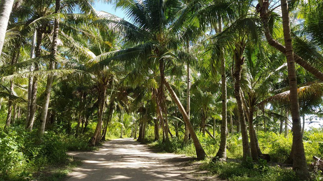 bantayan straat palmbomen