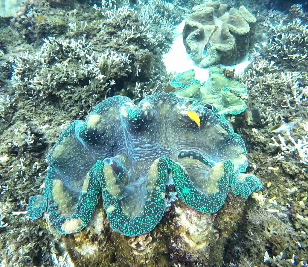 giant clam camiguin sunken cemetery