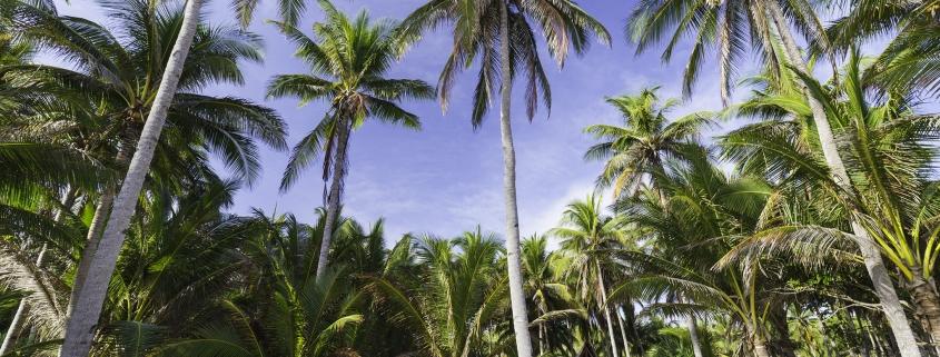 palmbomen wit strand bamboehut