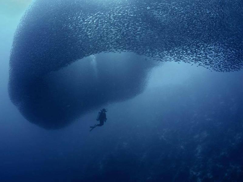sardine moalboal